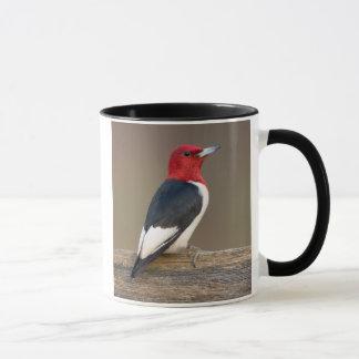 Red-headed Woodpecker on fence Mug