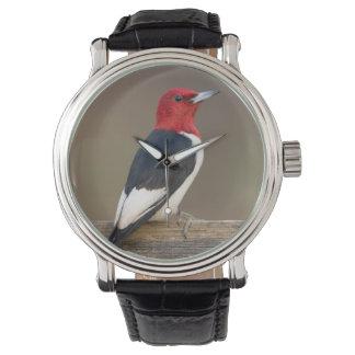 Red-headed Woodpecker on fence Watch