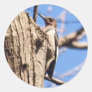 Red-headed Woodpecker Stickers