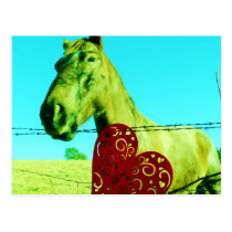 Red Heart and  Horse Postcard