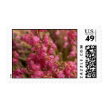 Red Heather flowers Stamps