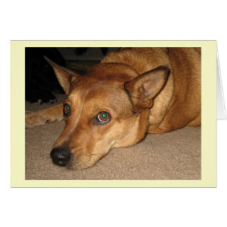 Red Heeler Cattle Dog - Ranch Dog Lover - Blank Greeting Card