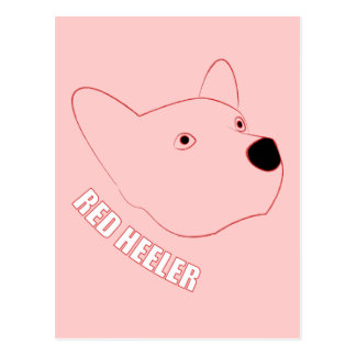 Red Heeler Postcard
