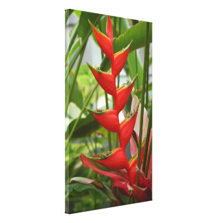 Red Heliconia Canvas Print