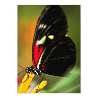 Red heliconius dora butterfly 5x7 paper invitation card