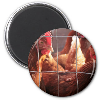 Red Hen, Rooster, Chicken on the Farm 2 Inch Round Magnet