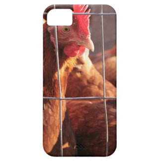 Red Hen, Rooster, Chicken on the Farm Case For The iPhone 5