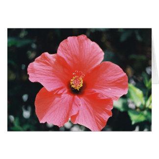Red Hibiscus (borderless) Card