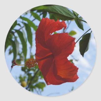 Red Hibiscus Classic Round Sticker