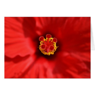 Red Hibiscus Close-up Card