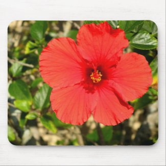 Red Hibiscus Flower Mousepad