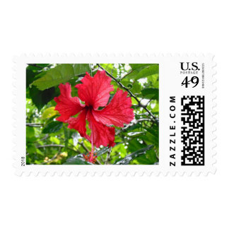 Red Hibiscus Flower Postage Stamp