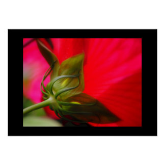 Red Hibiscus Flower Posters