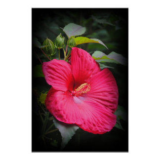 Red Hibiscus Flower Print