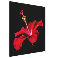 Red Hibiscus Flower Side View Canvas Print