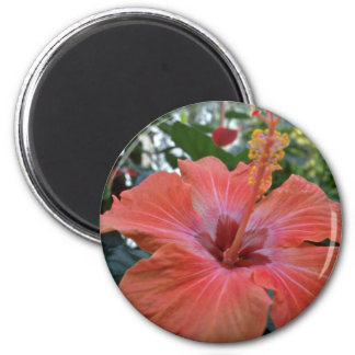 Red Hibiscus flowers Fridge Magnet