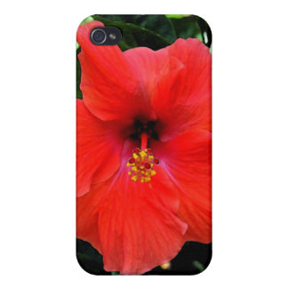 Red Hibiscus Fresco Cover For iPhone 4