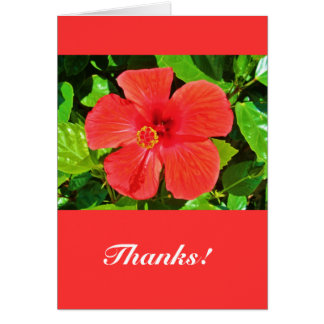 Red Hibiscus - Greeting card
