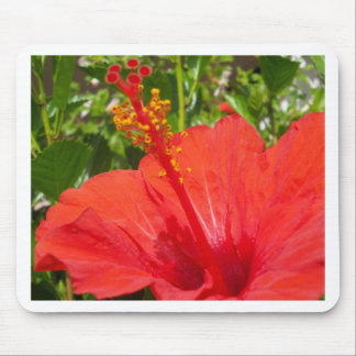 Red Hibiscus Mouse Pad