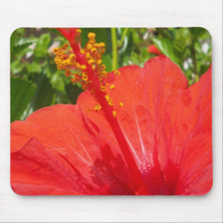 Red Hibiscus Mouse Pads