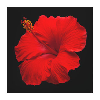 Red Hibiscus on Black- Customized Template Gallery Wrapped Canvas