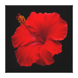 Red Hibiscus on Black- Customized Template Canvas Print