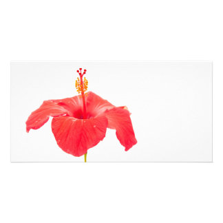 red hibiscus on white postcard