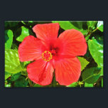 "Red Hibiscus - Photo Print<br><div class=""desc"">A photography of a beautiful red hibiscus flower.</div>"