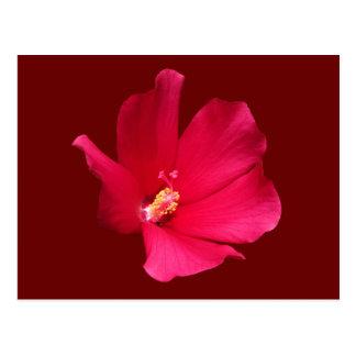 Red Hibiscus ~ posrcard Postcard