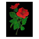 Red Hibiscus Post Card