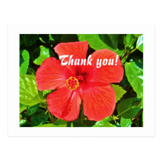 Red Hibiscus - Postcard