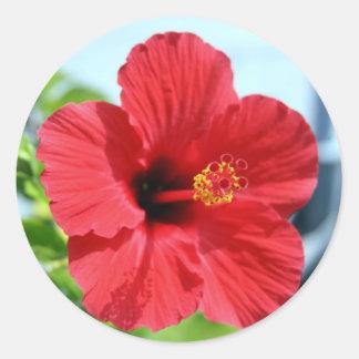 Red Hibiscus Sticker