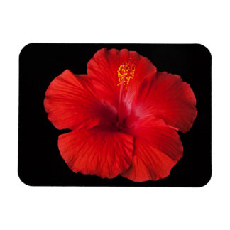 Red Hibiscus Tropical Flower Flowers Floral Magnet