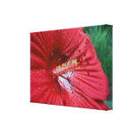 Red Hibiscus With Raindrops Gallery Wrapped Canvas