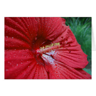 Red Hibiscus With Raindrops Greeting Card