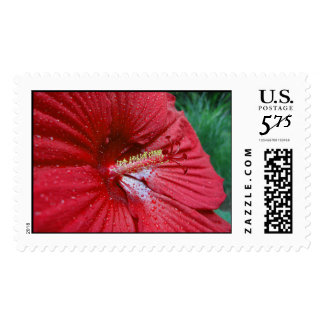 Red Hibiscus With Raindrops – Large Postage Stamps