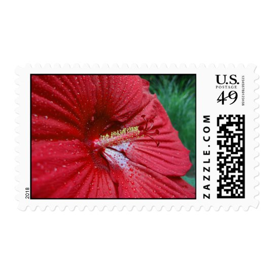 Red Hibiscus With Raindrops – Medium Postage
