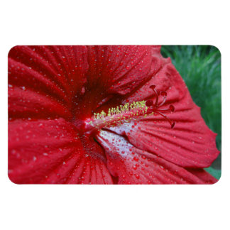 Red Hibiscus With Raindrops Rectangular Photo Magnet