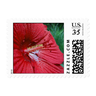 Red Hibiscus With Raindrops – Small Postage
