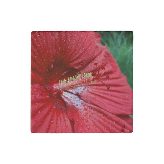 Red Hibiscus With Raindrops Stone Magnet