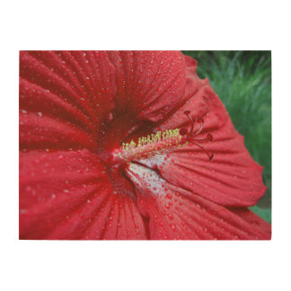 Red Hibiscus With Raindrops Wood Wall Art