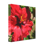 Red Hibiscus Wrapped Canvas Gallery Wrap Canvas