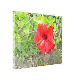 Red Hibiscus Yellow stigma Canvas Print