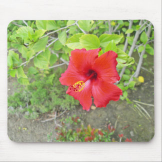 Red Hibiscus Yellow stigma Mouse Pad