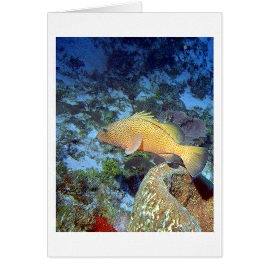 Red Hind and Barrel Sponge Card