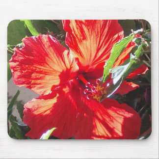 Red Hisbiscus Mouse Pad