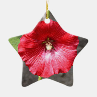 Red hollyhock flower in bloom Double-Sided star ceramic christmas ornament