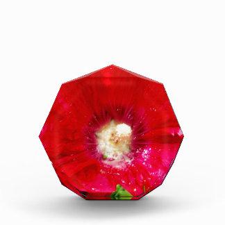 Red Hollyhock Flowers Award