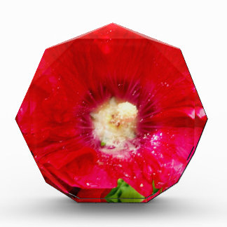 Red Hollyhock Flowers Awards