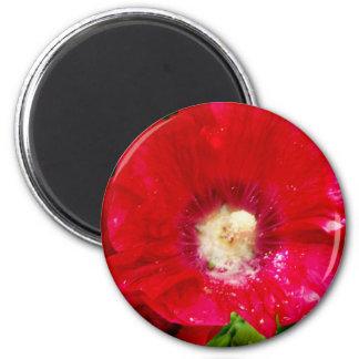 Red Hollyhock Flowers Magnet